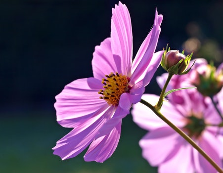 Free stock photo of nature, summer, purple, garden