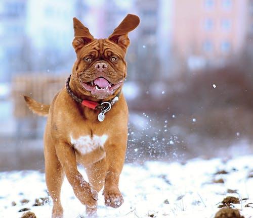 Fotos de stock gratuitas de adorable, animal, canino, colores fríos