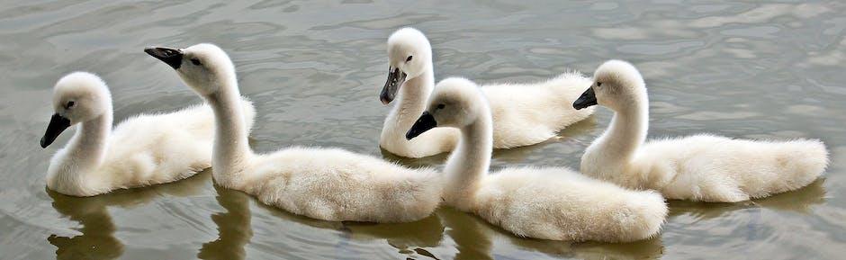 New free stock photo of bird, water, animal