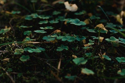 Fotobanka sbezplatnými fotkami na tému detailný záber, listy, rastliny, zelená