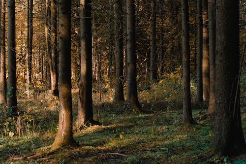 Foto d'estoc gratuïta de arbres, bosc, boscos, branques d'arbre