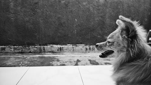 Gratis stockfoto met hond