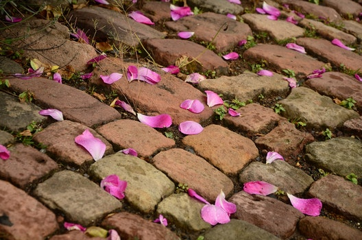 Pink Flower Petals on Brown Brick Way