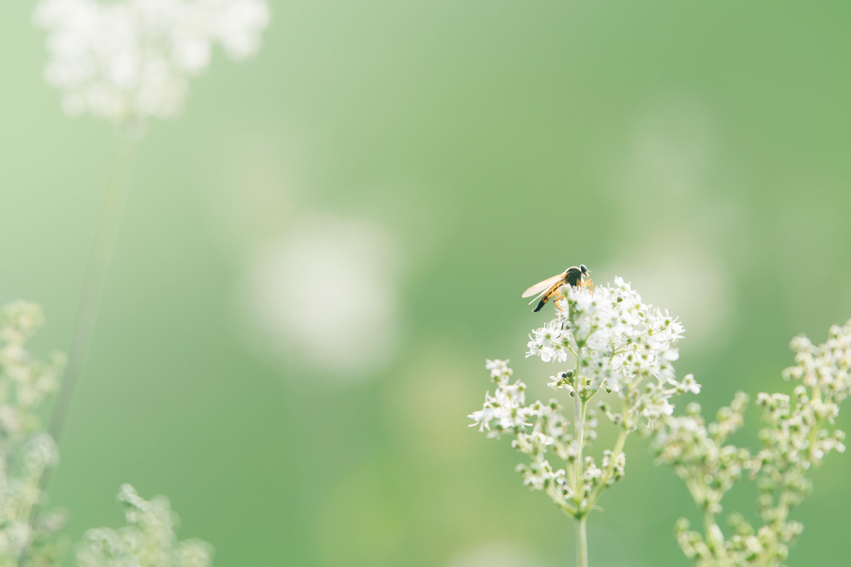 flóra, HD tapeta, hmyz