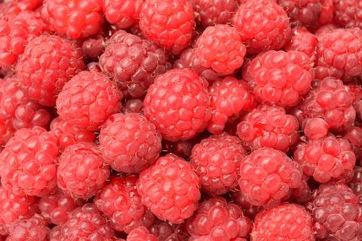 Free stock photo of healthy, red, raspberries, sweet