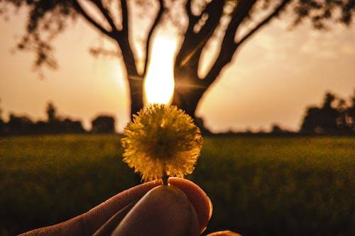 Darmowe zdjęcie z galerii z drzewo, gałąź drzewa, kwiat dzwonka, promień słońca