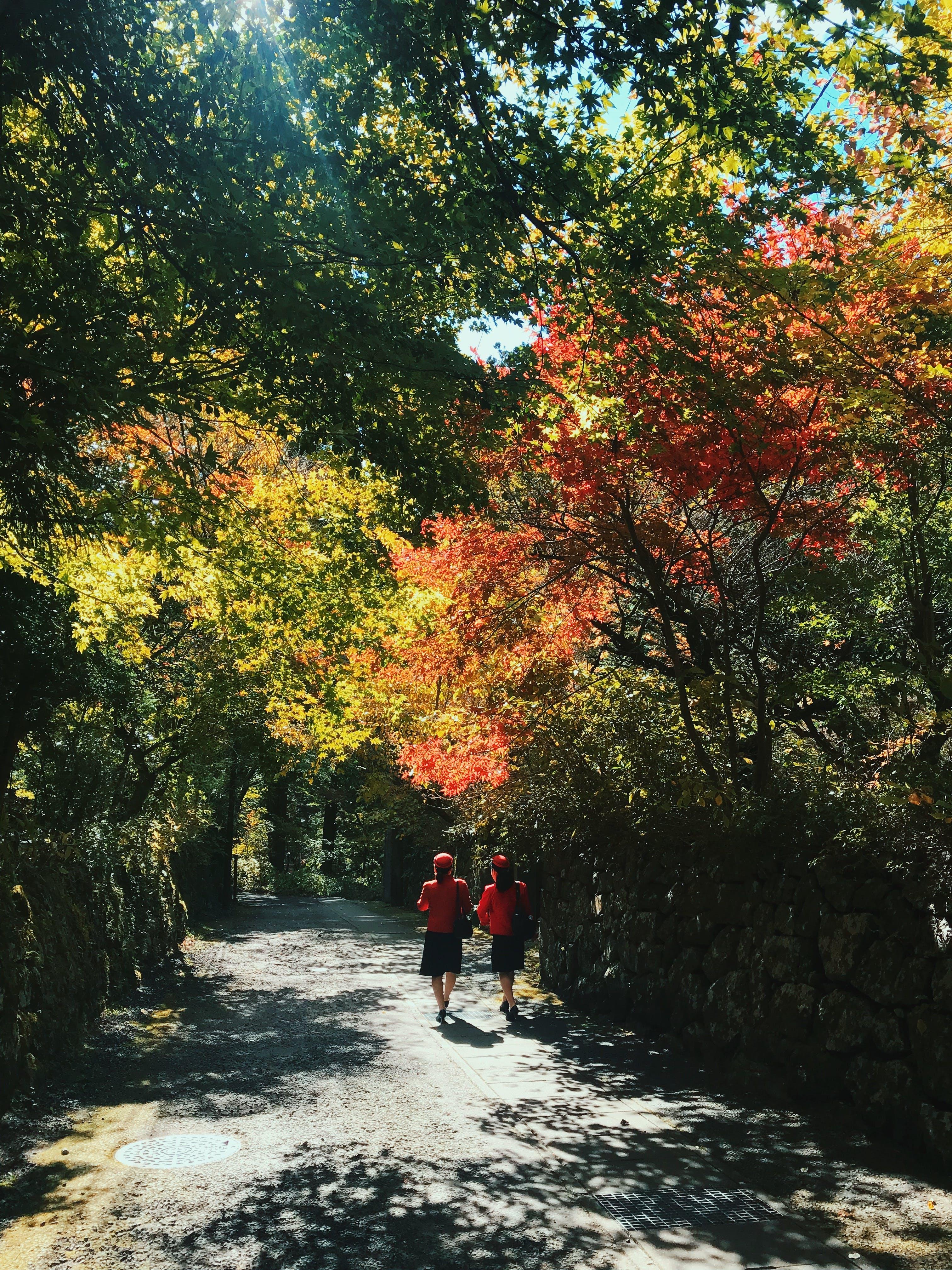 Kostenloses Stock Foto zu bäume, gehen, menschen, pfad