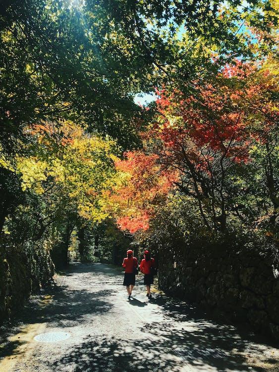 Two Women Walking on Pathway Beside Trees