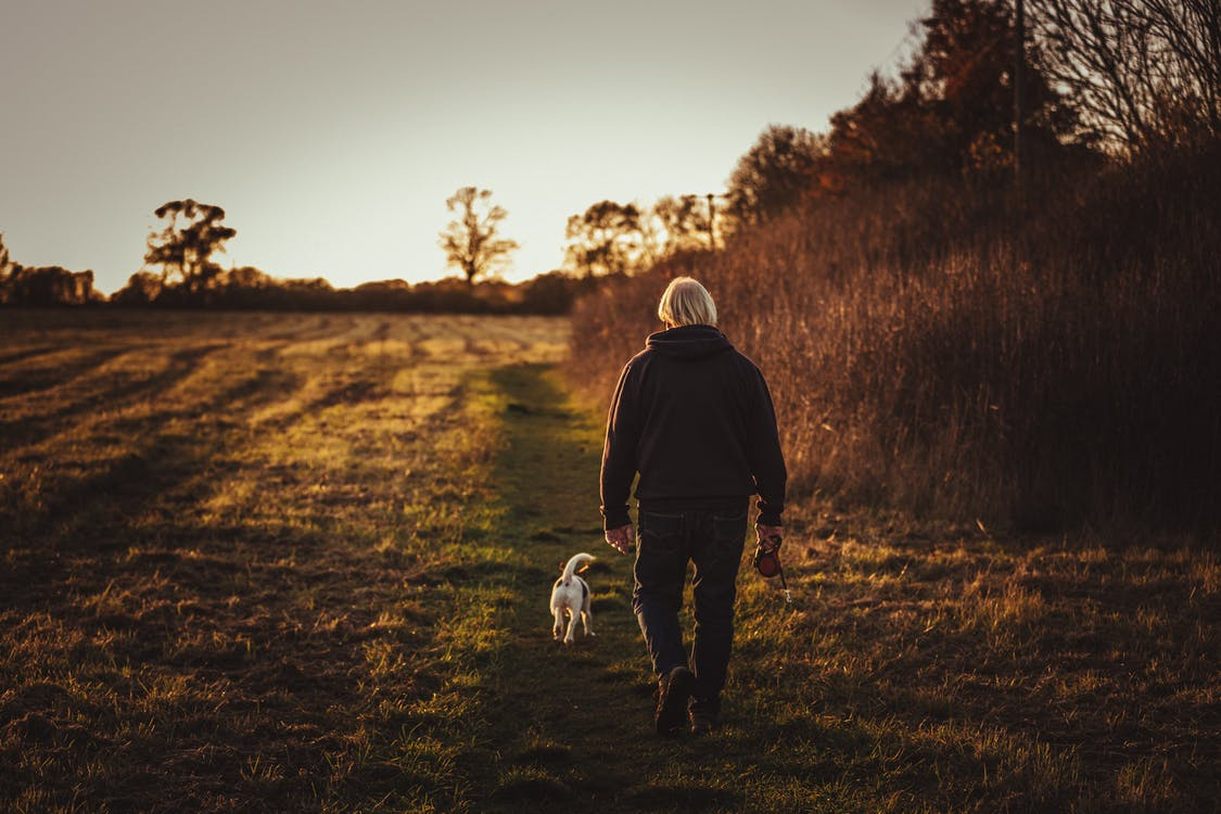 Person Walking With Puppy Near Trees