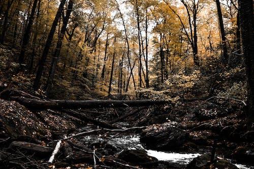 Immagine gratuita di alberi, boschi, impianti, natura