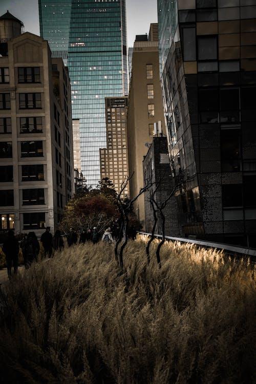 Foto profissional grátis de arquitetura, arranha-céu, arrepiante, assustador