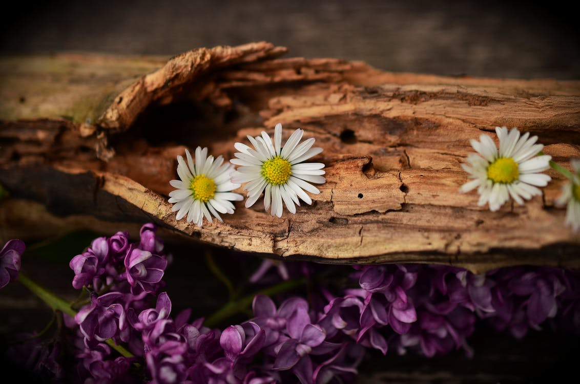 White Petaled Flower on Brown Trunks