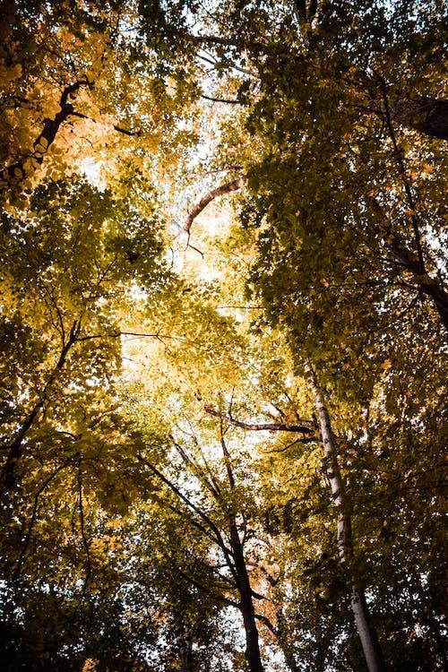 árvores, filiais, galhos