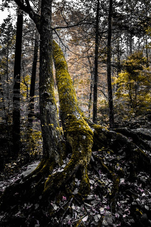 Foto d'estoc gratuïta de arbres, arrels, bagul, bosc