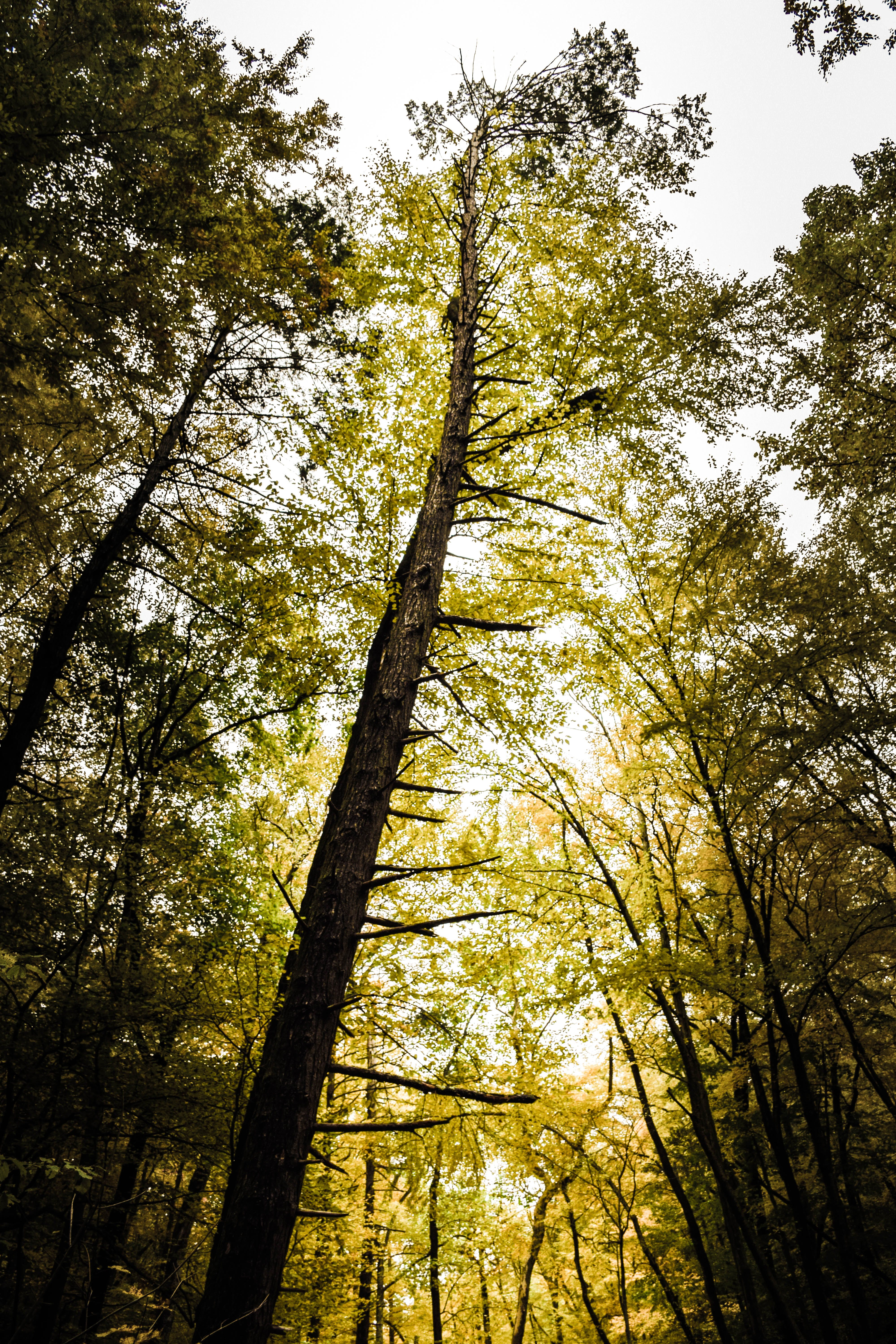 Low Angle Photography of Green-leafed Tree