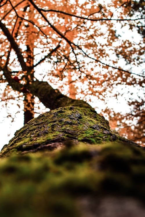 Low Angle Photography of Orange Leafed Tree