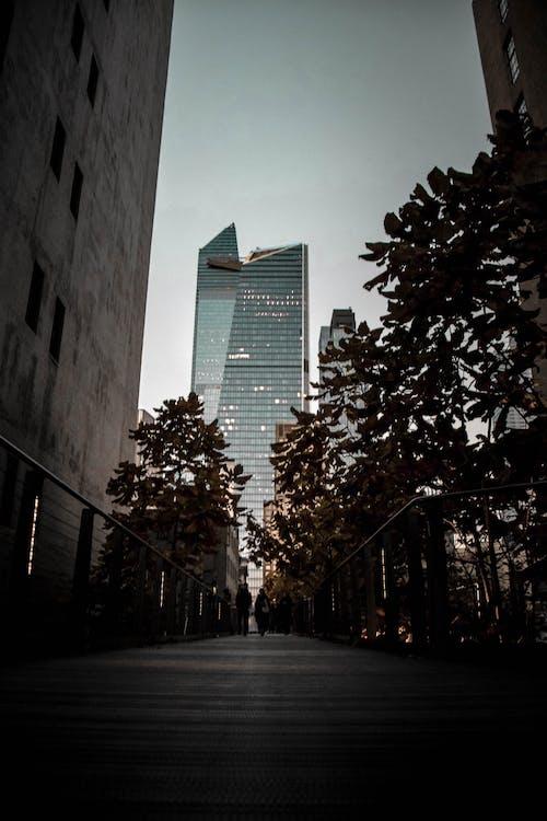 Immagine gratuita di alberi, architettura, centro città, cielo