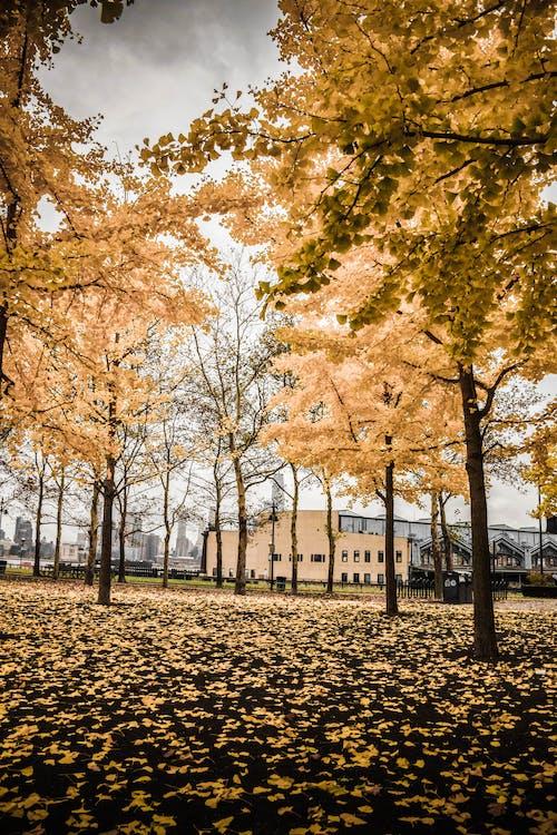 公園, 分支機構, 天性, 季節 的 免费素材照片