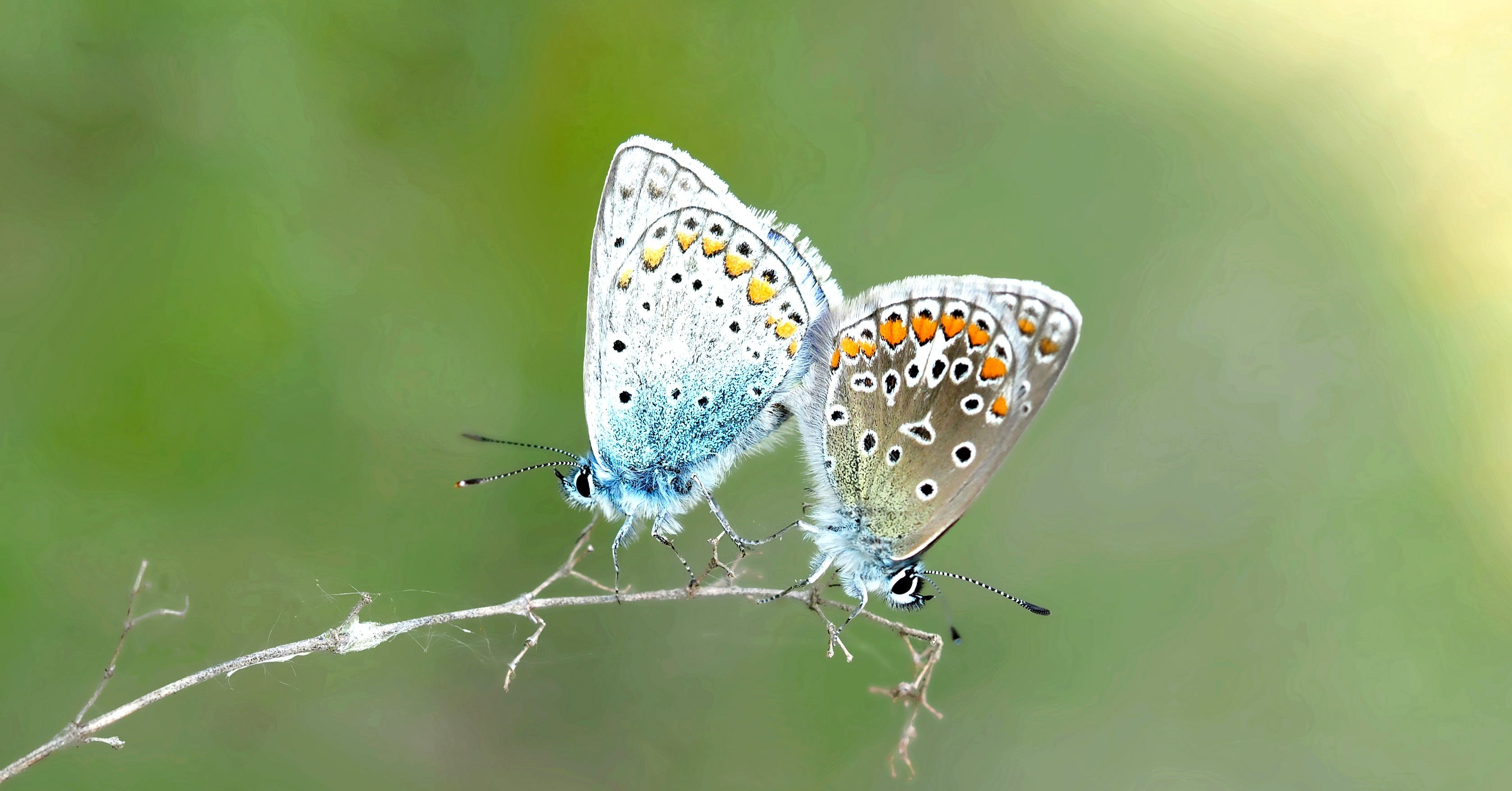 2 Butterfly on Plant Steam