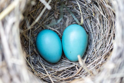 Selective Focus Photography2 Blue Egg on Nest