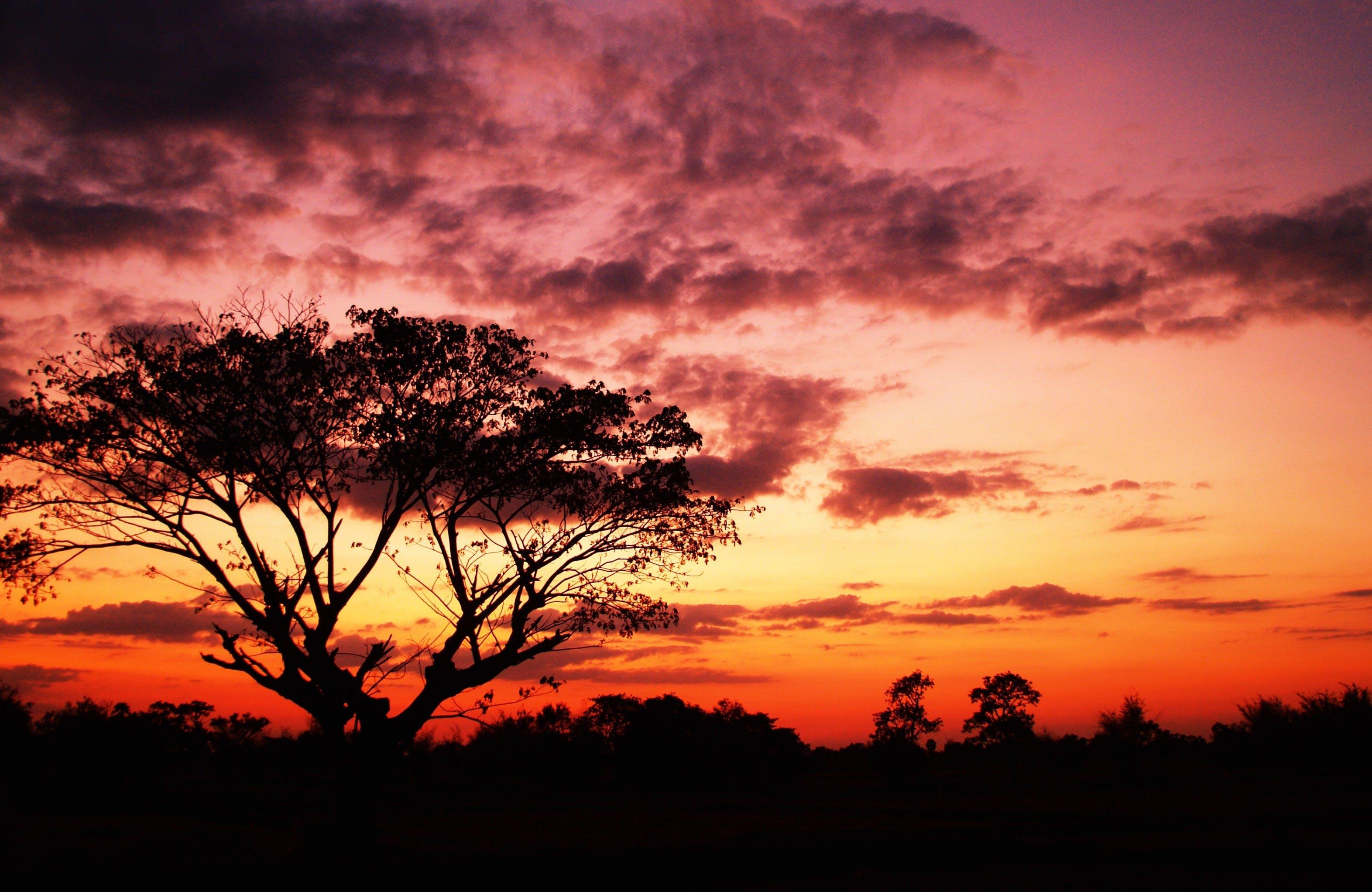 Foto d'estoc gratuïta de alba, arbre, capvespre, cel