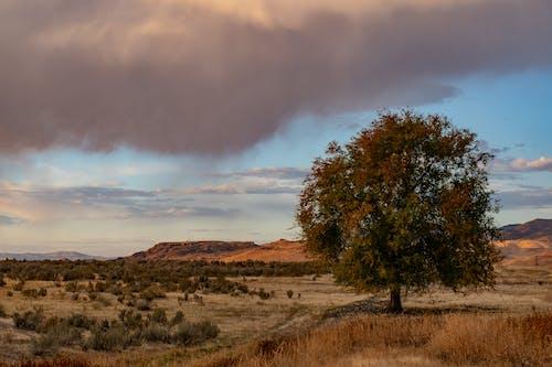 Gratis stockfoto met bergen, bomen, gouden uur, gras