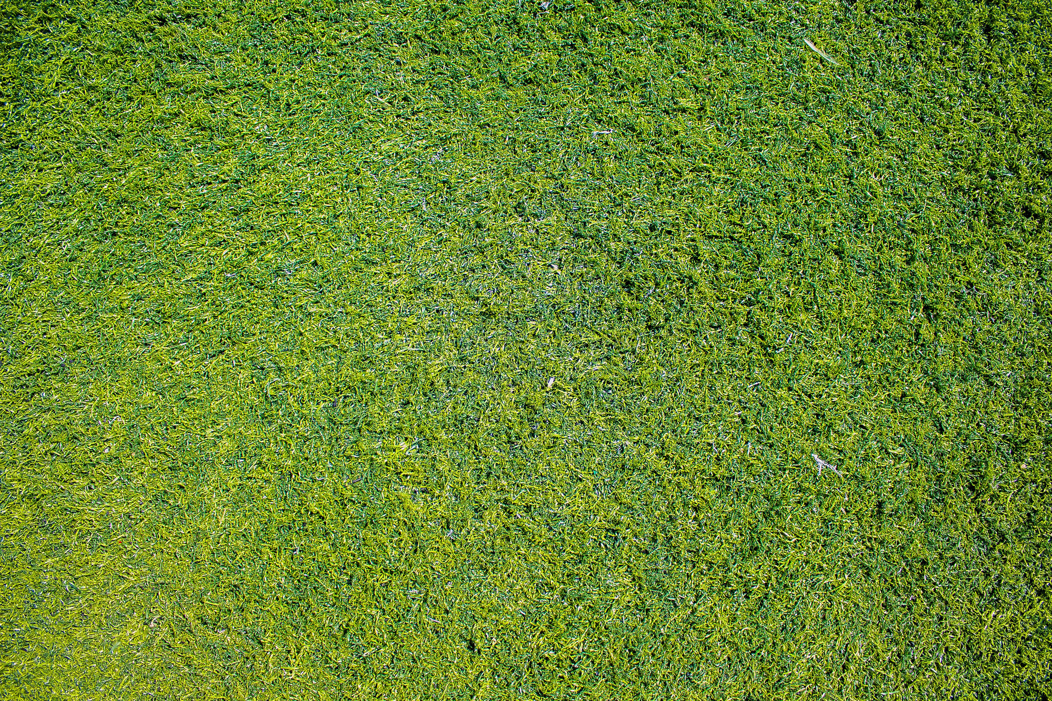 grass texture - Falco ifreezer co