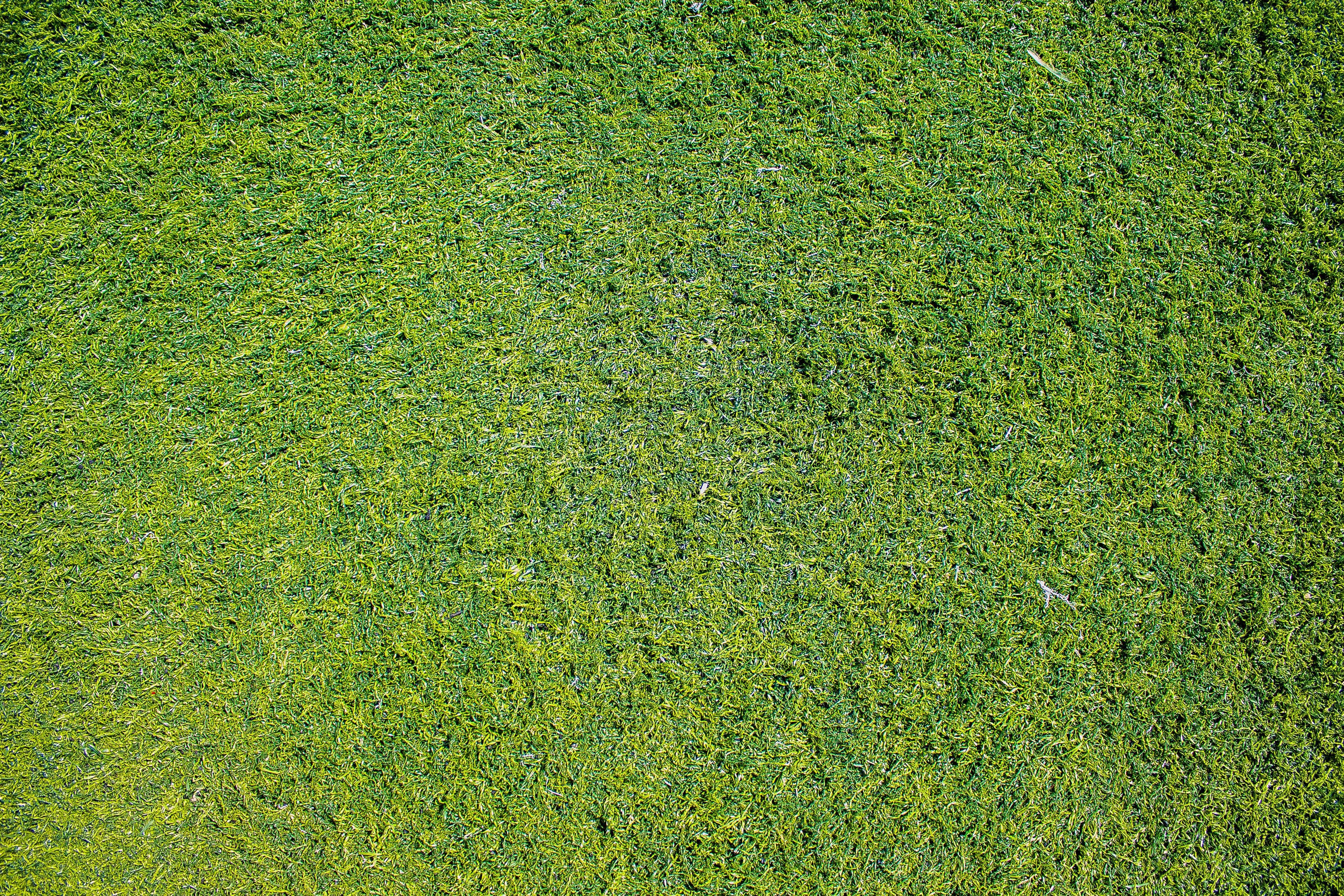 Top View Photo of Grass