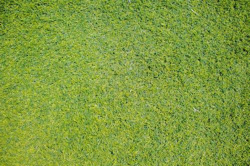 Widok Z Góry Zdjęcie Trawy