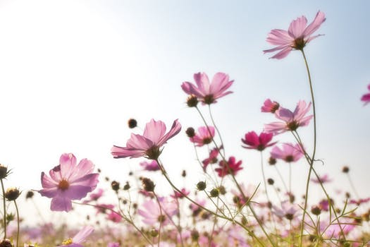 1000 great flower background photos pink flower field mightylinksfo Choice Image