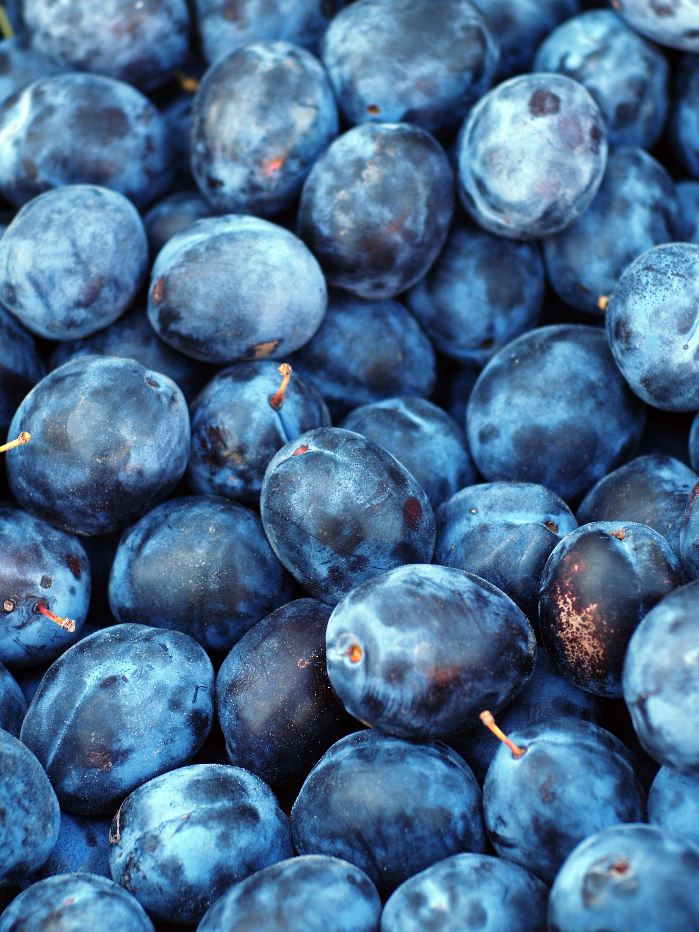 Free stock photo of blue, fresh, fruit, plant