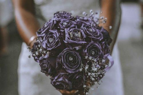 Základová fotografie zdarma na téma drahokamy, flóra, kvést, květ