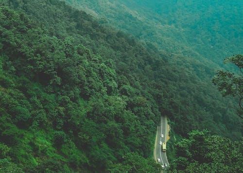 Foto d'estoc gratuïta de arbres, bellesa, bosc, carretera