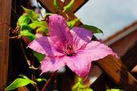 petals, plant, leaves