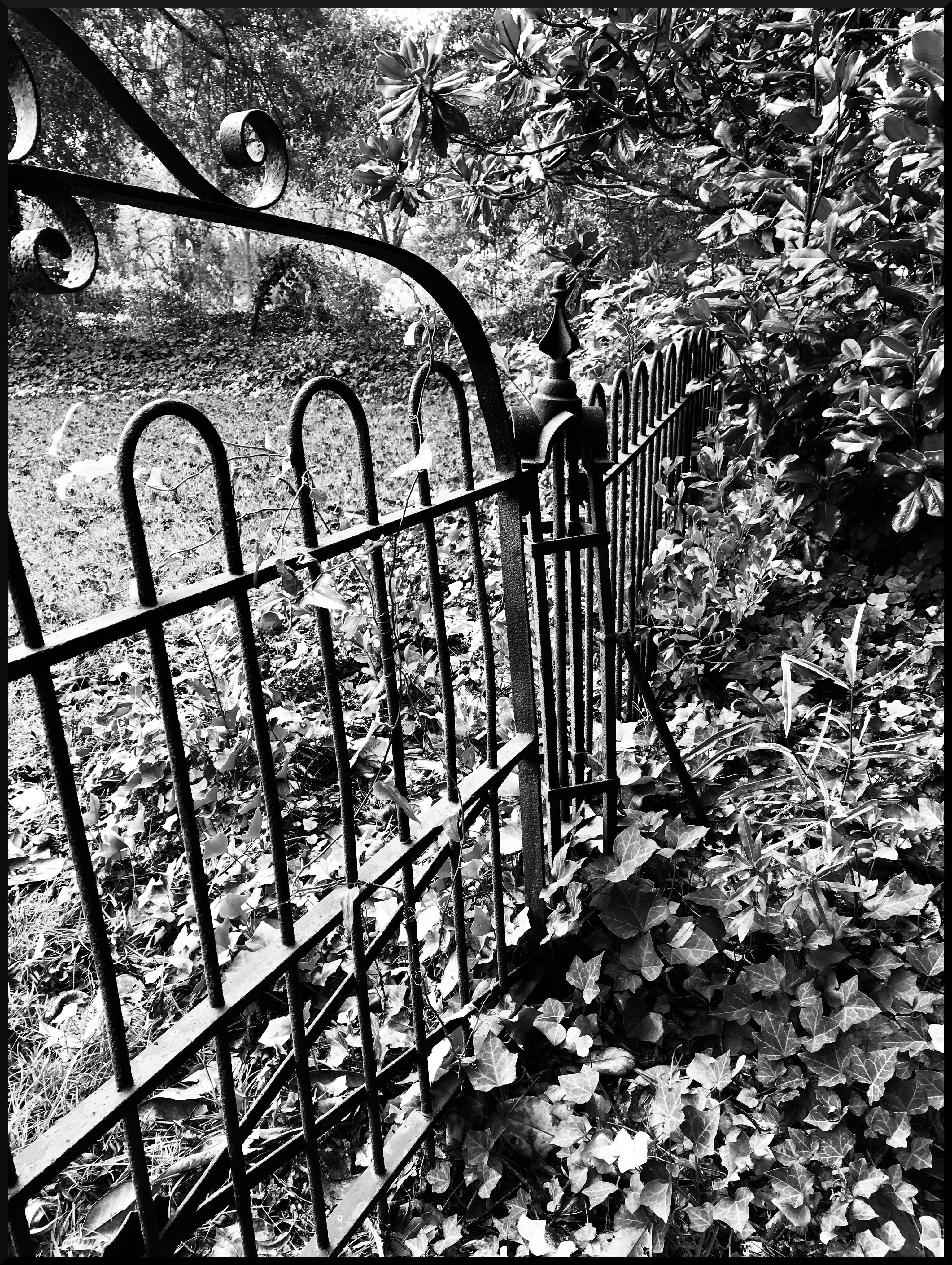 Free stock photo of cemetery, iron fence, iron gate