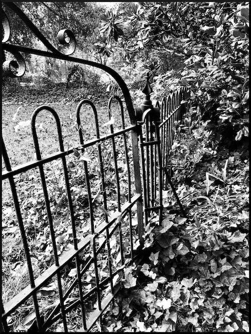 Gratis stockfoto met begraafplaats, ijzer hek, ijzeren poort