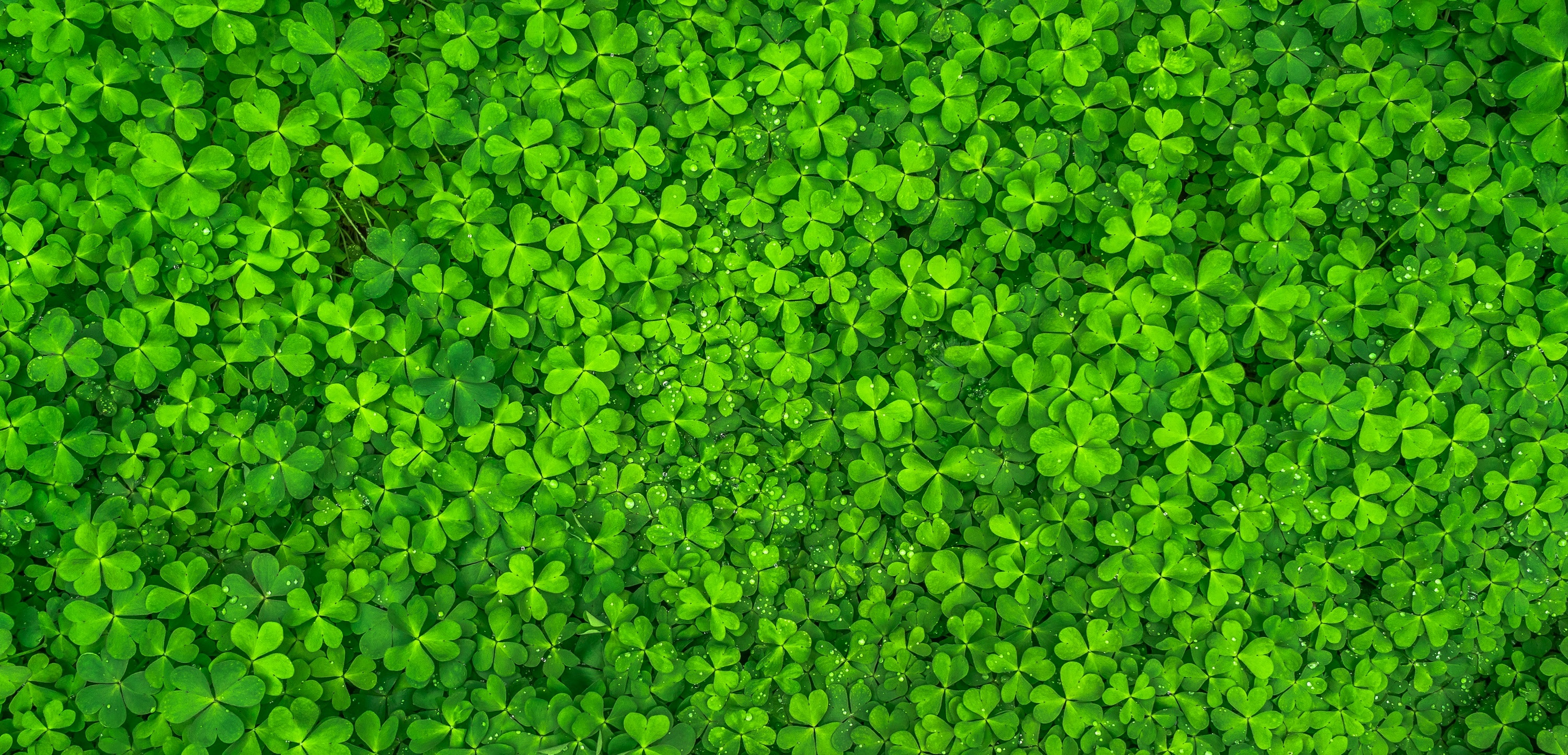 St. Patrick's Day Wallpaper Background