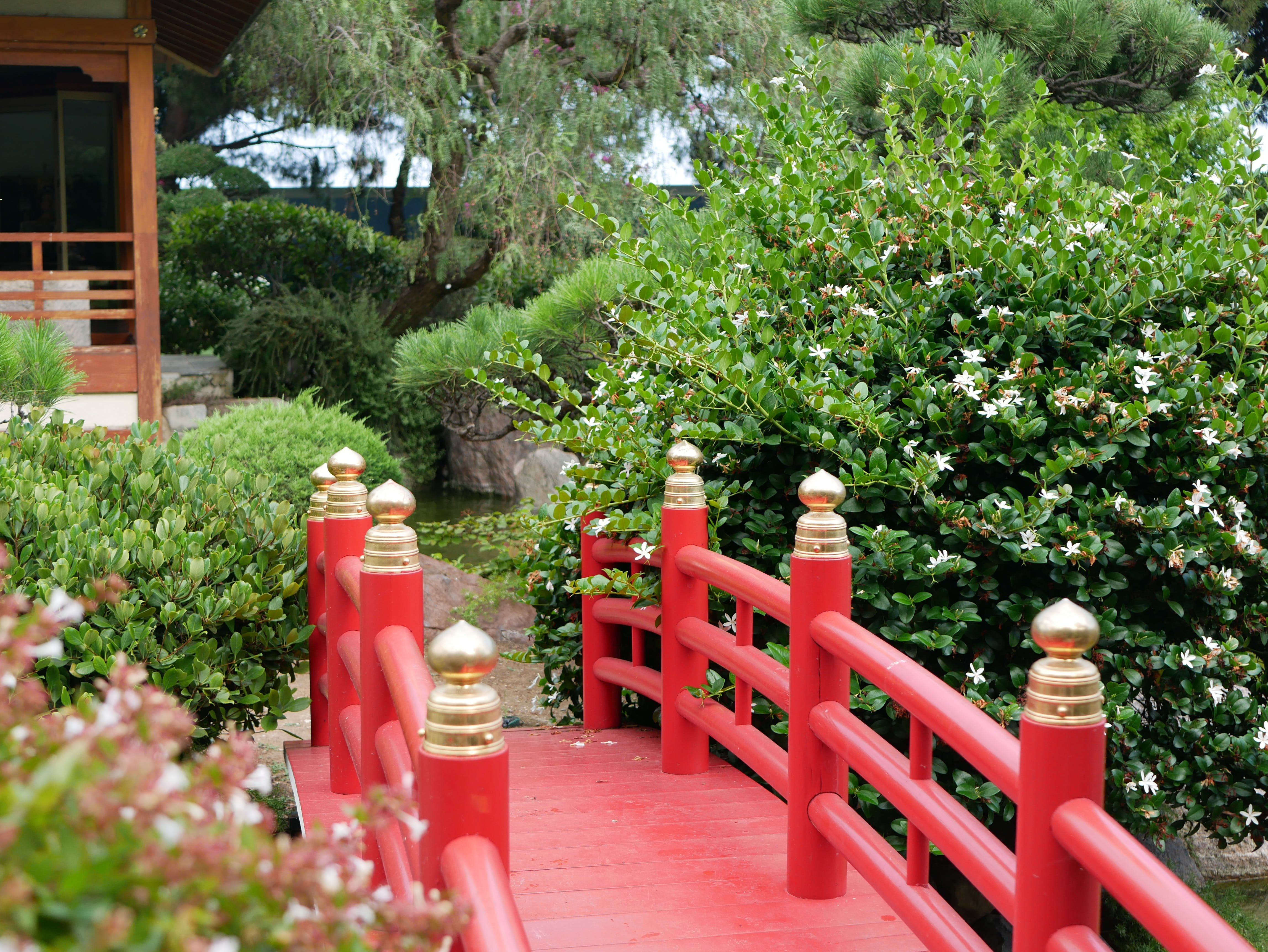 Free stock photo of garden, green, Japanese, red