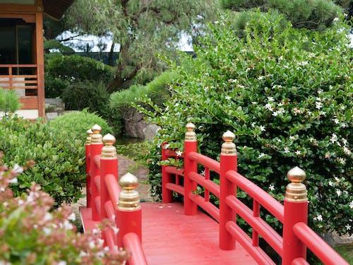 Gratis lagerfoto af grøn, have, japansk, rød