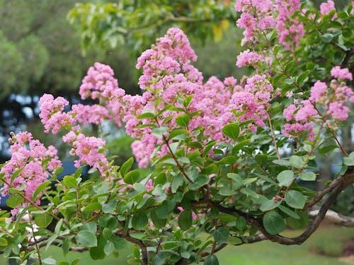 Gratis lagerfoto af blomster, grøn, træ