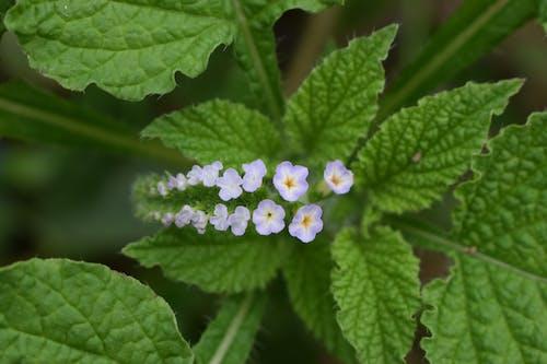 Kostenloses Stock Foto zu blumen, grün, winzigen blüten