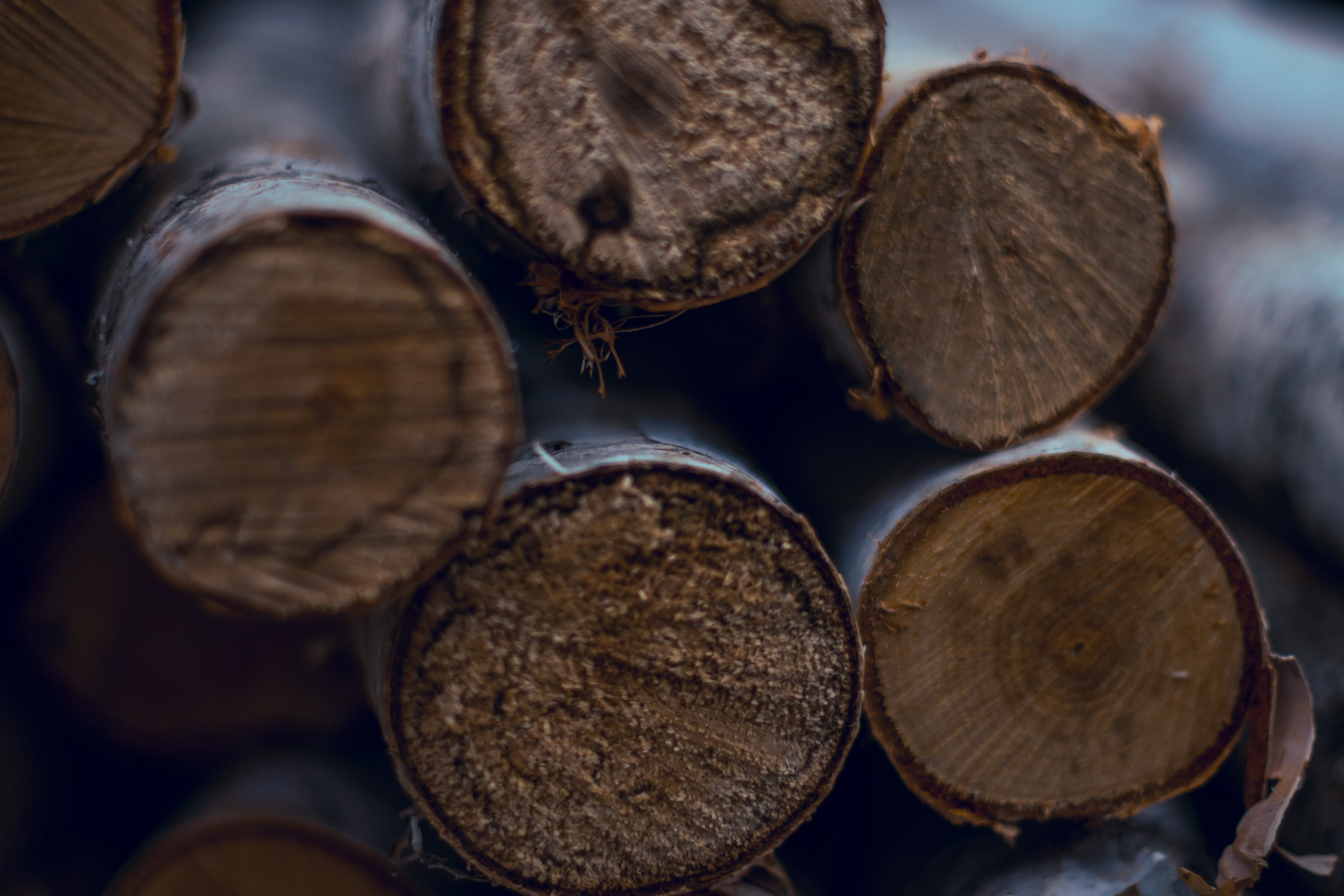 Selective Focus Photography Pile of Log