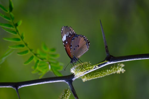 Shallow Photography of Brown and Black Butterfly Perched on Black Plantbranch