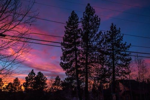 Ingyenes stockfotó 4k-háttérkép, barna, ég, erdő témában