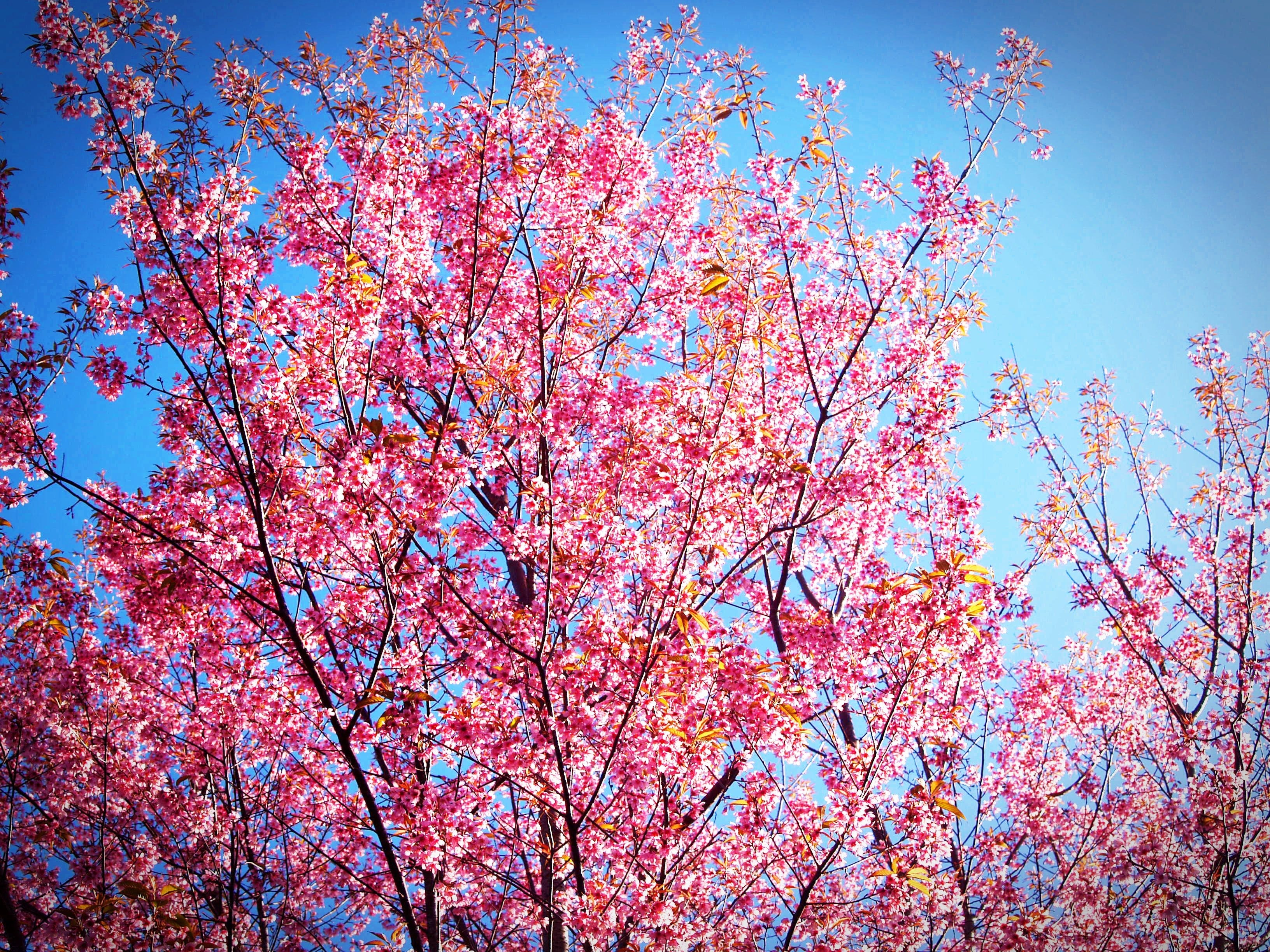 Pink and Yellow Leafed Tree Under Blue Sky during Daytime