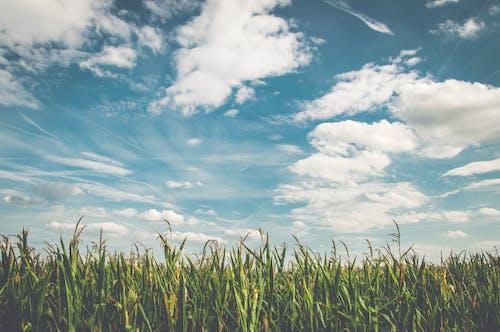 Безкоштовне стокове фото на тему «skyscape, небо, нива, поле»