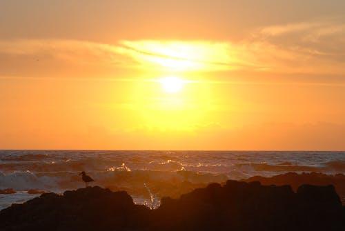 Free stock photo of sundown