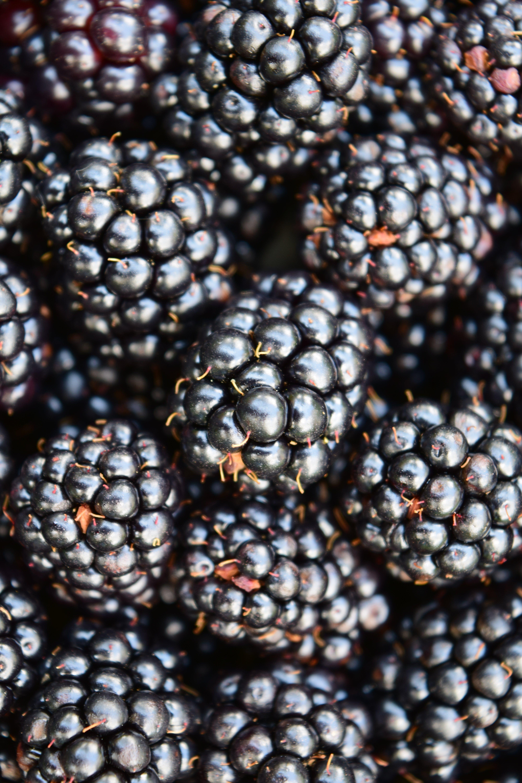 Free stock photo of background, berries, black, blackberries