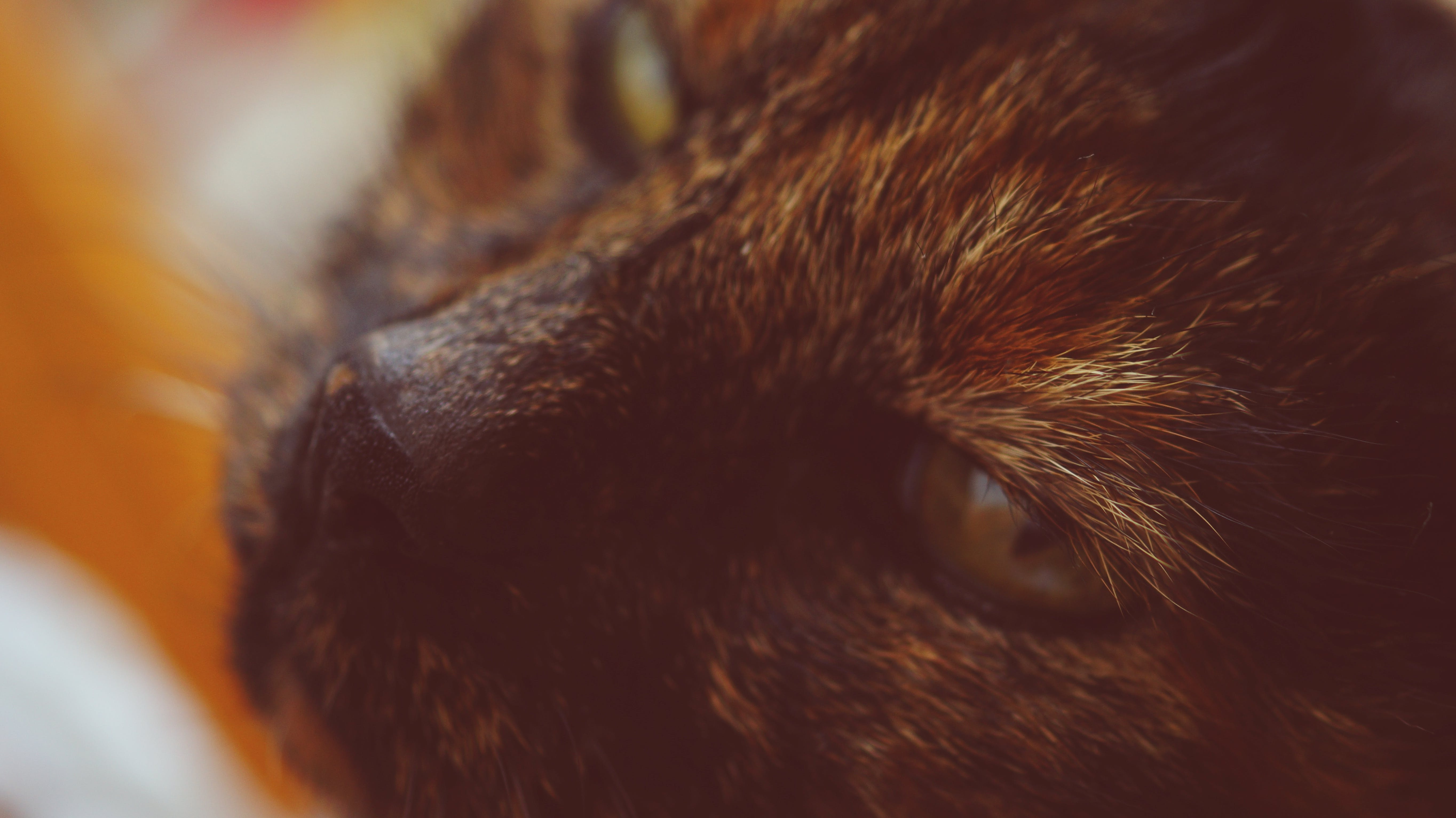 Free stock photo of close-up view, cat