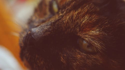 Free stock photo of cat, close up view